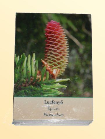 Európai virágeszenciák (DEVA 96) kártyái