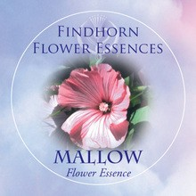 Erdei mályva (Malva sylvestris – Mallow) Findhorn Virágeszencia 15ml.