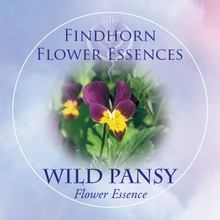 Árvácska (Viola tricolor – Wild Pansy) Findhorn Virágeszencia 15ml.