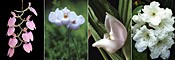Gentle Sleep összetett orchidea eszencia