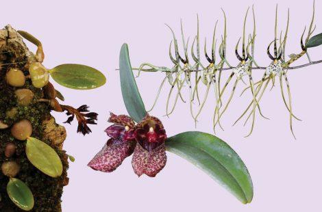 Revitalise orchid combination essence