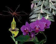 Self Renewal összetett orchidea eszencia
