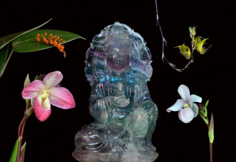 Light of the Soul Living Tree Orchid Essence