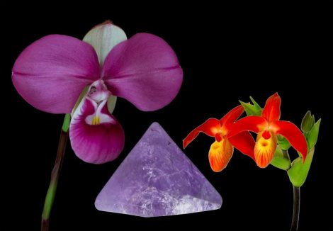 Vital Clarity összetett orchidea eszencia