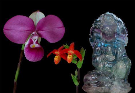 Vital Light összetett orchidea eszencia