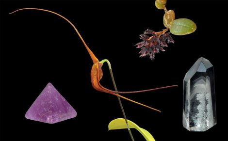 Knowing összetett orchidea eszencia