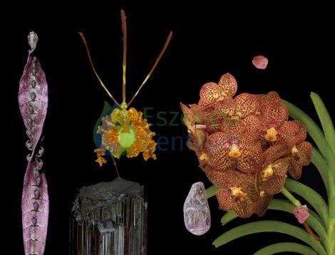 Highest Reflection összetett orchidea eszencia