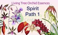 Spirit Path 1 összetett orchidea eszencia
