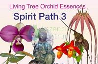 Spirit Path 3 összetett orchidea eszencia