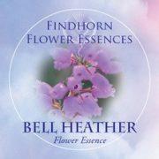 Bell Heather Findhorn Flower Essence 15ml.