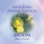 Broom Findhorn Flower Essence 15ml.