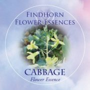 Cabbage Findhorn Flower Essence 15ml.