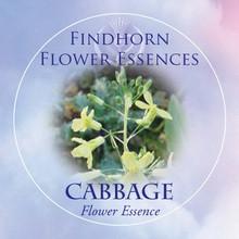 Cabbage Findhorn Flower Essence 15ml.