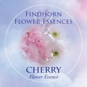 Cherry Findhorn Flower Essence 15ml.