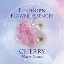 Cherry Findhorn Flower Essence 15ml.