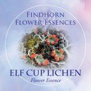 Skarlátzuzmó (Cladonia coccifera – Elf Cup Lichen) Findhorn Virágeszencia 15ml.