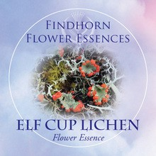 Elf Cup Lichen Findhorn Flower Essence 15ml.