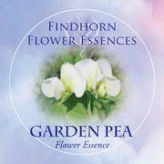 Garden Pea Findhorn Flower Essence 15ml.