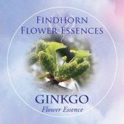 Gingko Findhorn Flower Essence 15ml.