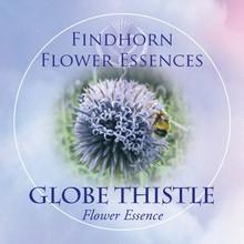 Globethistle Findhorn Flower Essence 15ml.