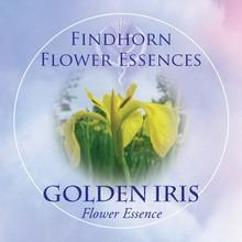 Golden Iris Findhorn Flower Essence 15ml.