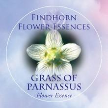 Fehérmájvirág (Parnassia palustris – Grass of Parnassus) Findhorn Virágeszencia 15ml.