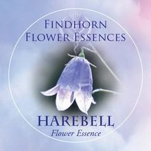 Harangvirág (Campanula rotundifolia – Harebell) Findhorn Virágeszencia 15ml.