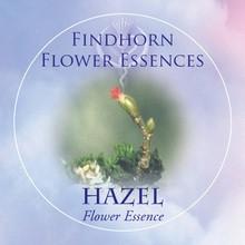 Hazel Findhorn Flower Essence 15ml.