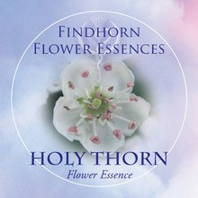 Holy Thorn Findhorn Flower Essence 15ml.