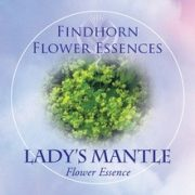 Palástfű (Alchemilla vulgaris – Lady's Mantle) Findhorn Virágeszencia 15ml.