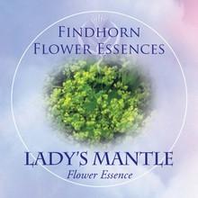 Lady's Mantle Findhorn Flower Essence 15ml.