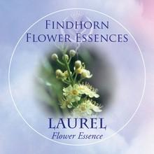 Laurel Findhorn Flower Essence 15ml.