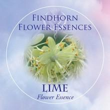 Lime  Findhorn Flower Essence 15ml.