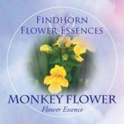 Bohócvirág(Mimulus guttatus – Monkey Flower) Findhorn Virágeszencia 15ml.