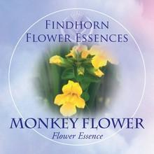 Monkey Flower Findhorn Flower Essence 15ml.