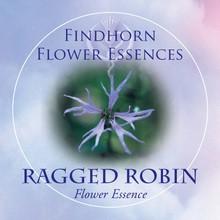 Réti kakukkszegfű (Lychnis flos-cuculi – Ragged Robin) Findhorn Virágeszencia 15ml.
