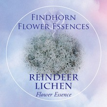 Reindeer Lichen Findhorn Flower Essence 15ml.