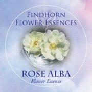 Fehér rózsa (Rosa alba – Rose Alba) Findhorn Virágeszencia 15ml.