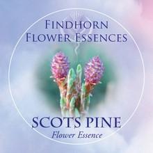 Scots Pine Findhorn Flower Essence 15ml.