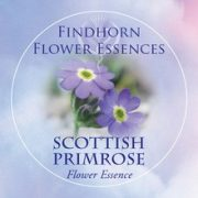 Scottish Primrose Findhorn Flower Essence 15ml.