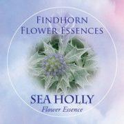Iringó (Eryngium maritimum – Sea Holly) Findhorn Virágeszencia 15ml.