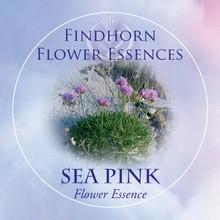 Pázsitszegfű (Armeria maritima – Sea Pink) Findhorn Virágeszencia 15ml.