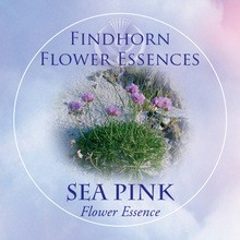 Sea Pink Findhorn Flower Essence 15ml.