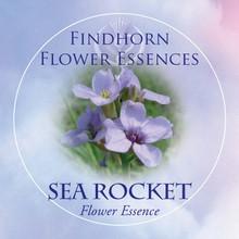 Sea Rocket Findhorn Flower Essence 15ml.