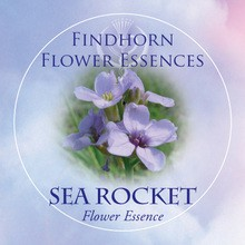 Sea Rocket Findhorn Flower Essence 15ml.