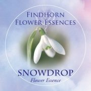 Hóvirág (Galanthus nivalis – Snowdrop) Findhorn Virágeszencia 15ml.
