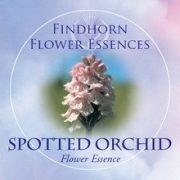 Kosbor (Dactylorhiza fuchsii – Spotted Orchid) Findhorn Virágeszencia 15ml.