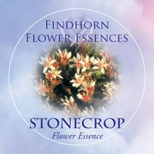 Stonecrop Findhorn Flower Essence 15ml.