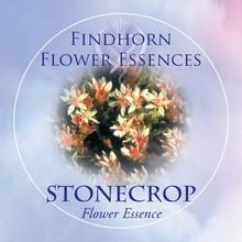 Stonecrop Findhorn Flower Essence 15ml.