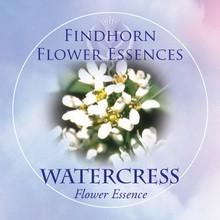 Watercress Findhorn Flower Essence 15ml.